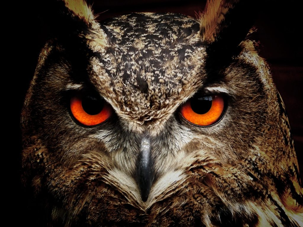 owl 1024x768 - Archives